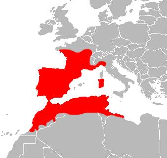 culebra viperina mapa